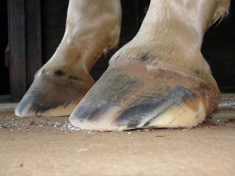 High Low Hooves